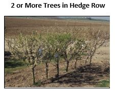 Hedgerow of 2 or more fruit trees