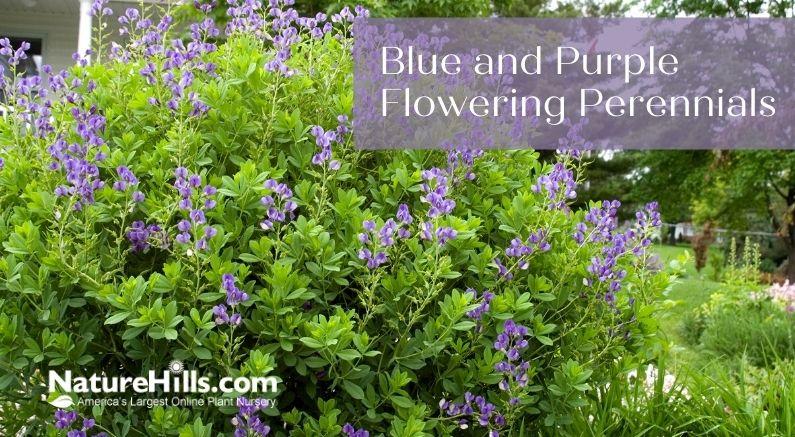 Blog Title Over a beautiful purple flowering bush
