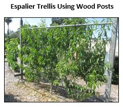Espalier trellis with wood posts