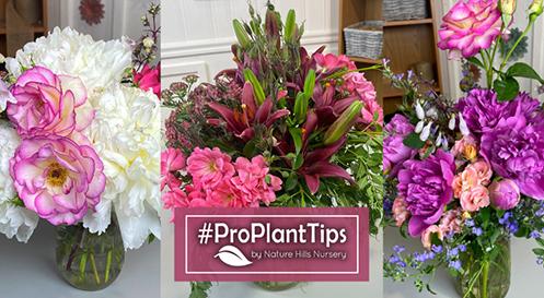 Floral Arrangements #ProPlantTips