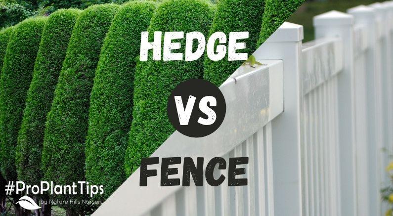 Large Banner Image for Hedge vs Fence Blog