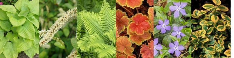 Plants that will work will in moist shady conditions