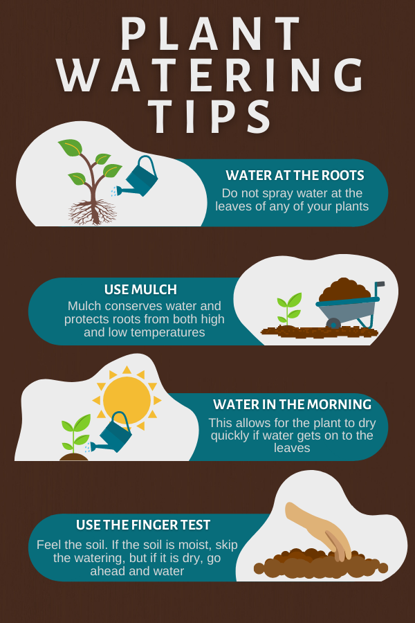 Watering Plants Tips Infographic