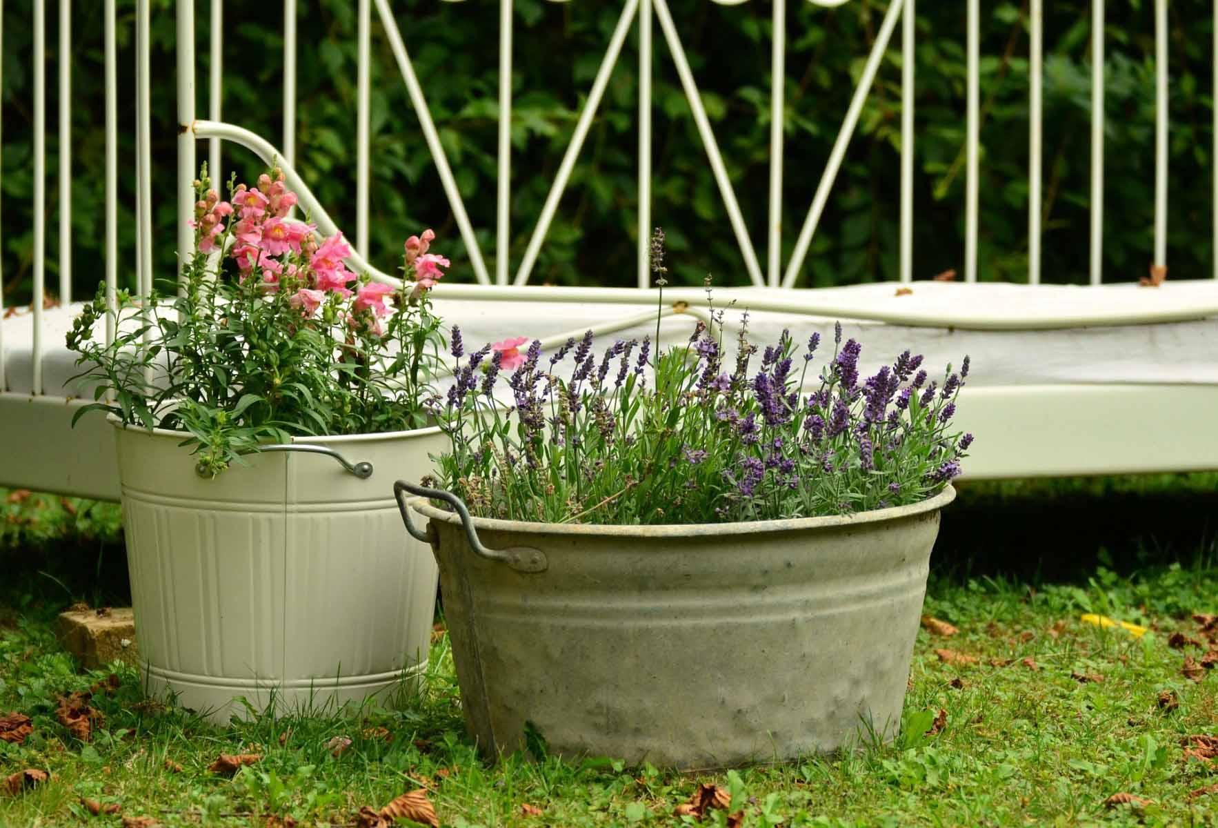 Perennial Container Garden