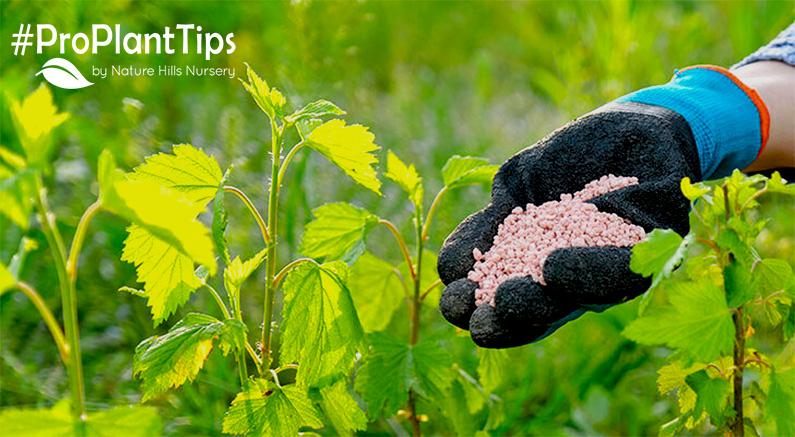 Fertilizing Plants