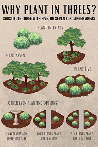 Planting in threes infographic