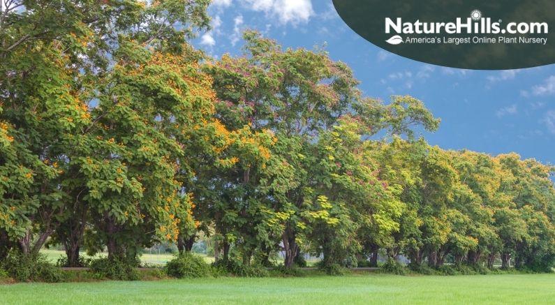 Windbreak Trees to Plant in Your Landscape