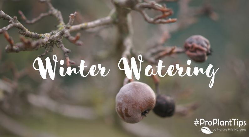 Title Image for Winter Watering Blog