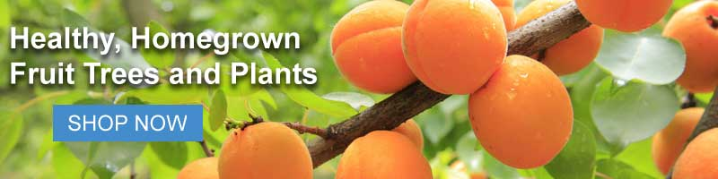 Shop all Nature Hills fruit trees and plants