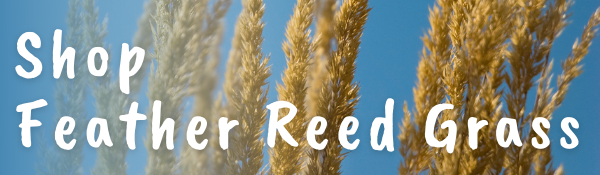 Shop Feather Feed Grass