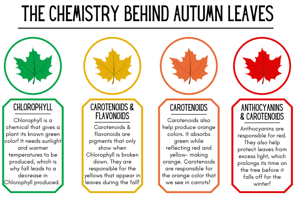 chemistry behind fall leaf colors