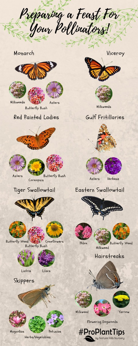 Butterflies and their plants