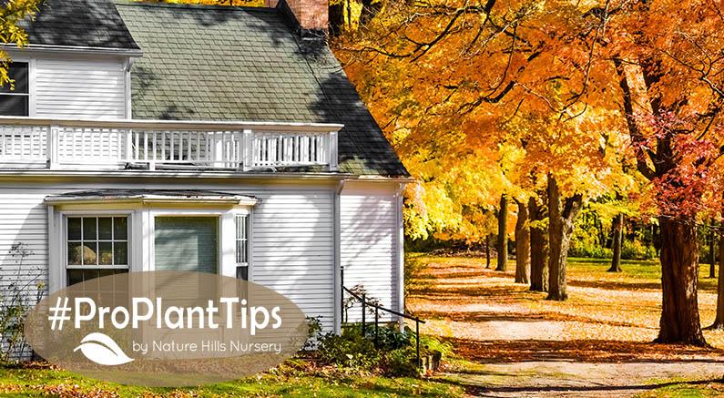 Pro Plants tips