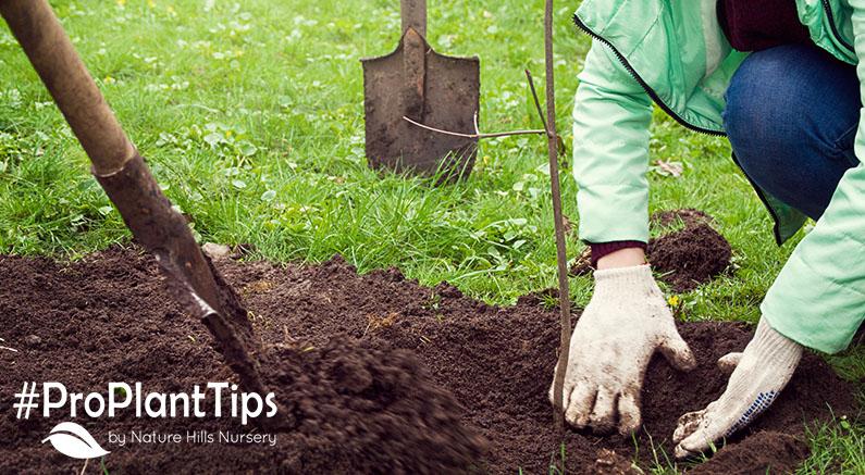 Planting Bareroot Tree