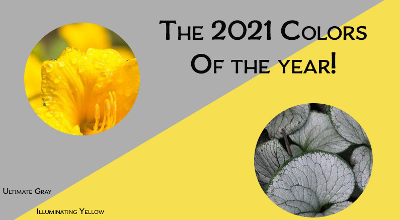 The 2021 Colors Of The Year