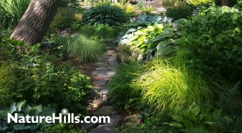 Shady garden filled with green perennials