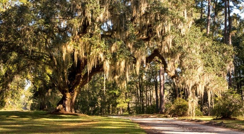 Southern Natives Blog
