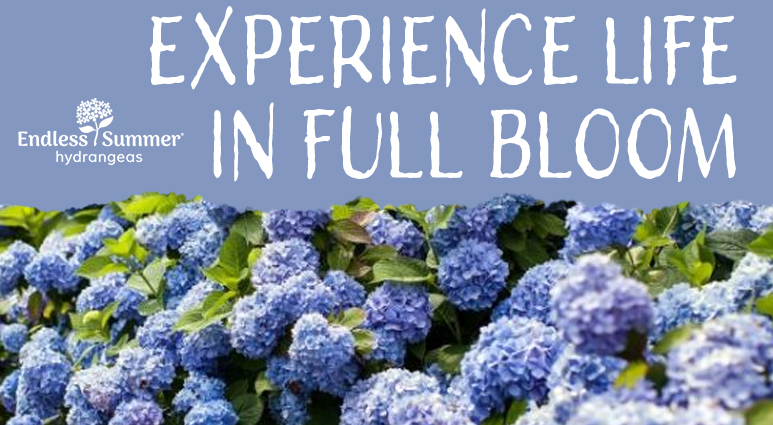 Experience Life in Full Bloom