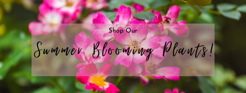 Summer Blooming Plants!   Save 22% to 60%