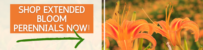 Shop Extended Bloom Perennials Now
