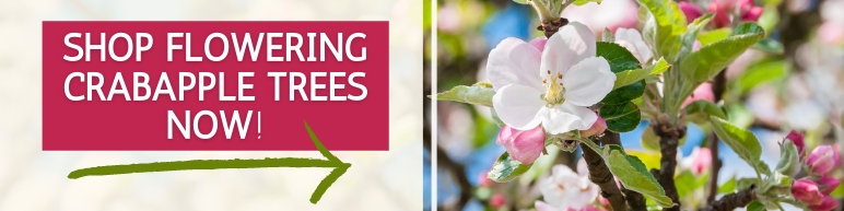 Shop Flowering Crabapple Trees Now
