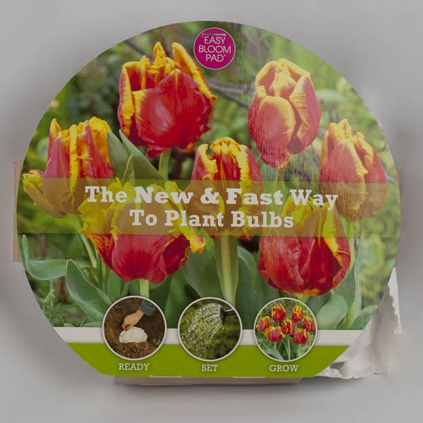 Bright Parrot Tulip Easy Bloom Pad