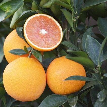Cara Cara Sweet Orange