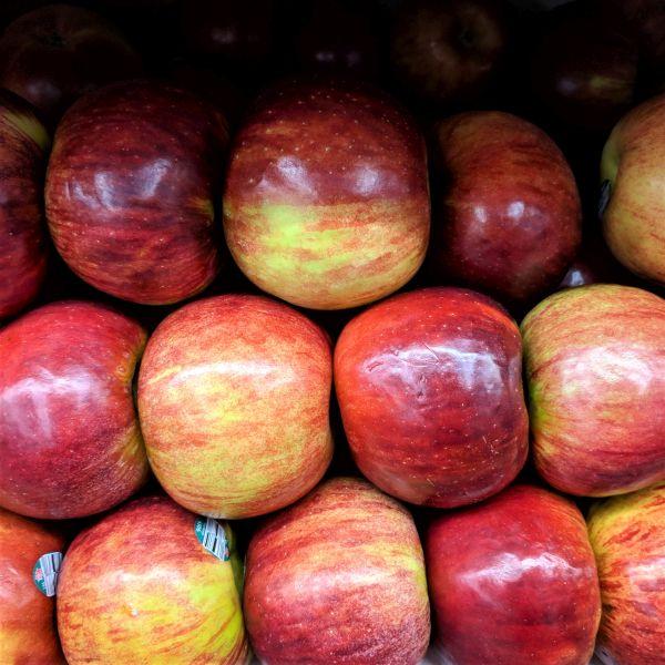 Image of Cortland Apple Tree