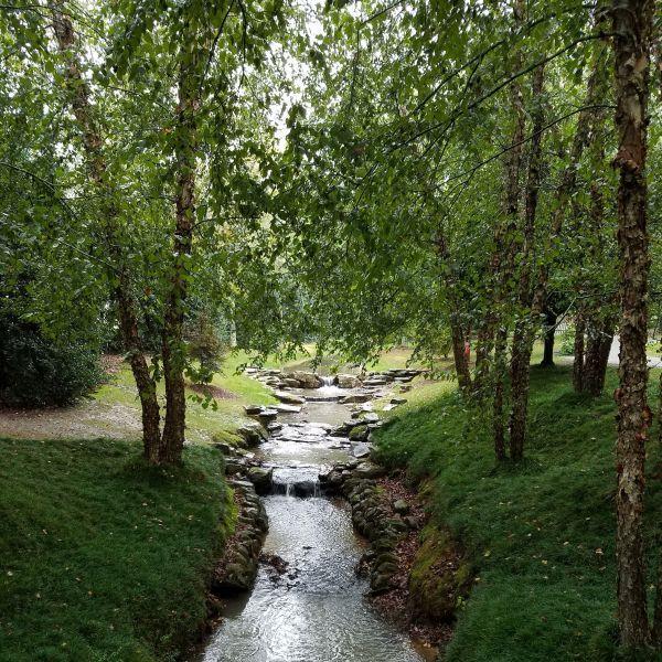 River Birch Buy At Nature Hills Nursery