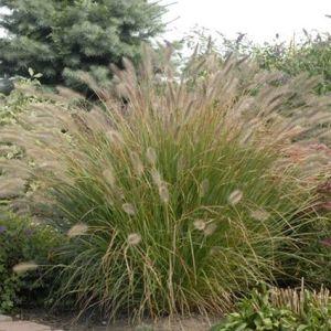 Desert Plains Grass Overview