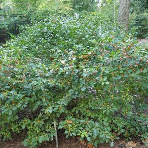 Jim Dandy Holly overview
