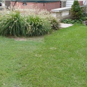Legacy Buffalo Grass Plugs Overview
