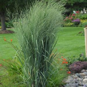 Totem Pole Switch Grass overview
