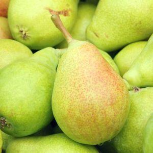 Pineapple Pear Tree, buy Pineapple Pear Tree