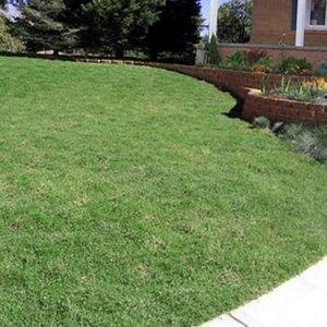 Prestige Plugs Lawn
