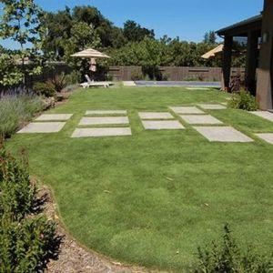 UC Verde Buffalo Grass Overview