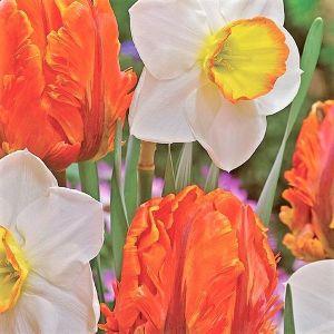 Dutch Design Tulip/Daffodil Mix