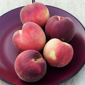 Babcock Peach Tree