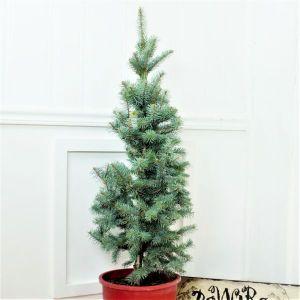 Baker's Colorado Blue Spruce Holiday Tree