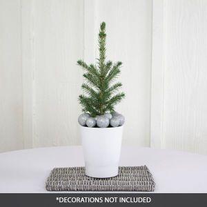 Black Hills Spruce Tabletop Christmas Tree