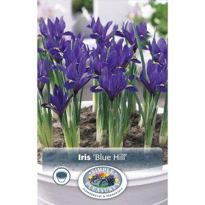 Blue Hill Iris