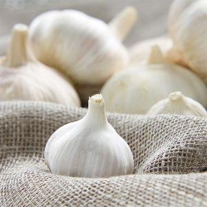 California Garlic