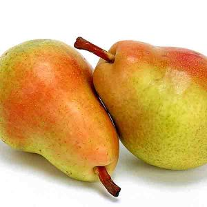 Clapp's Favorite European Pear Tree