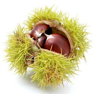 Colossal Chestnut Tree