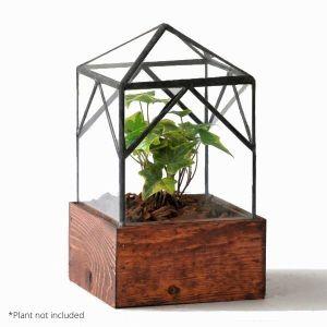 Ellias Trap Terrarium