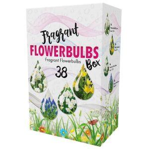 Fragrant Flowers Bulb Box