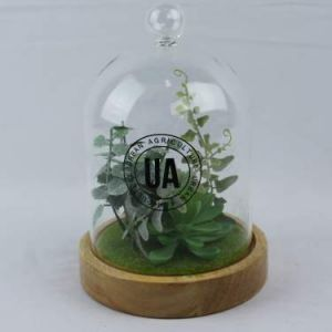 Large Glass Dome Succulents