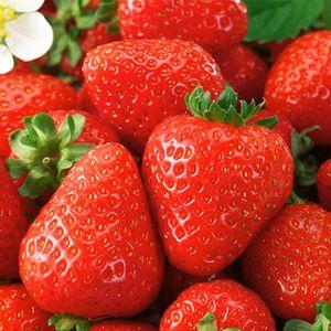 Honeoye Strawberry Plant