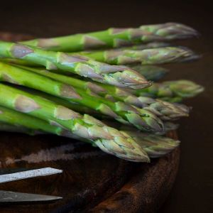 Jersey Knight Asparagus Plant