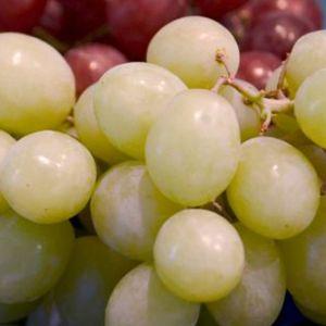 Kay Grape Vine